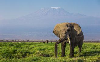Amboseli Nationalpark, Kenia Safari