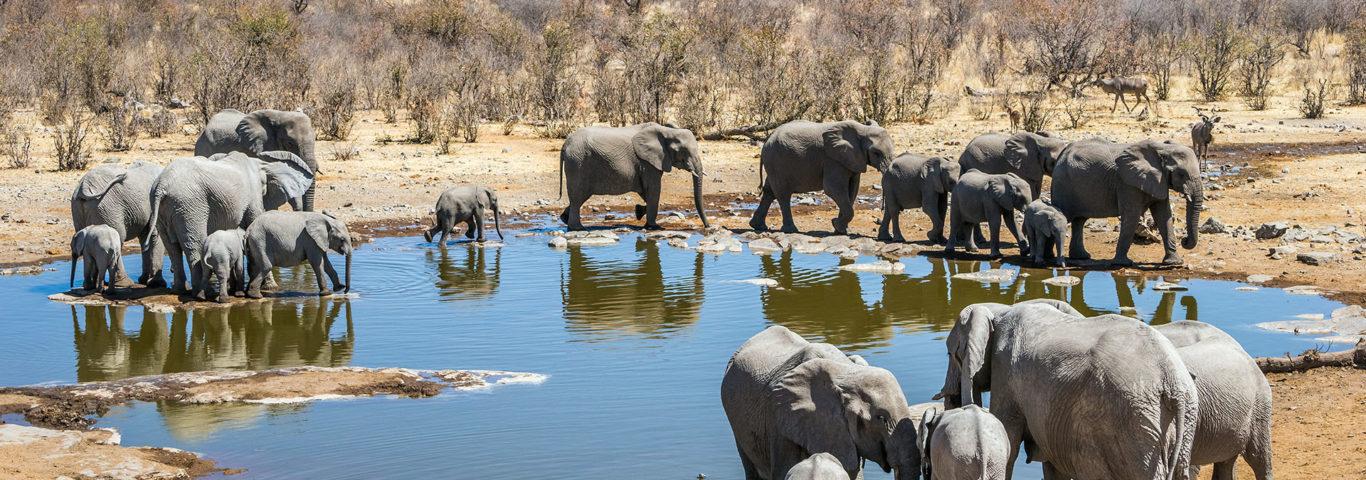 Namibia Rundreise Elefanten-Herde trinkt am Wasserloch im Etosha Nationalpark