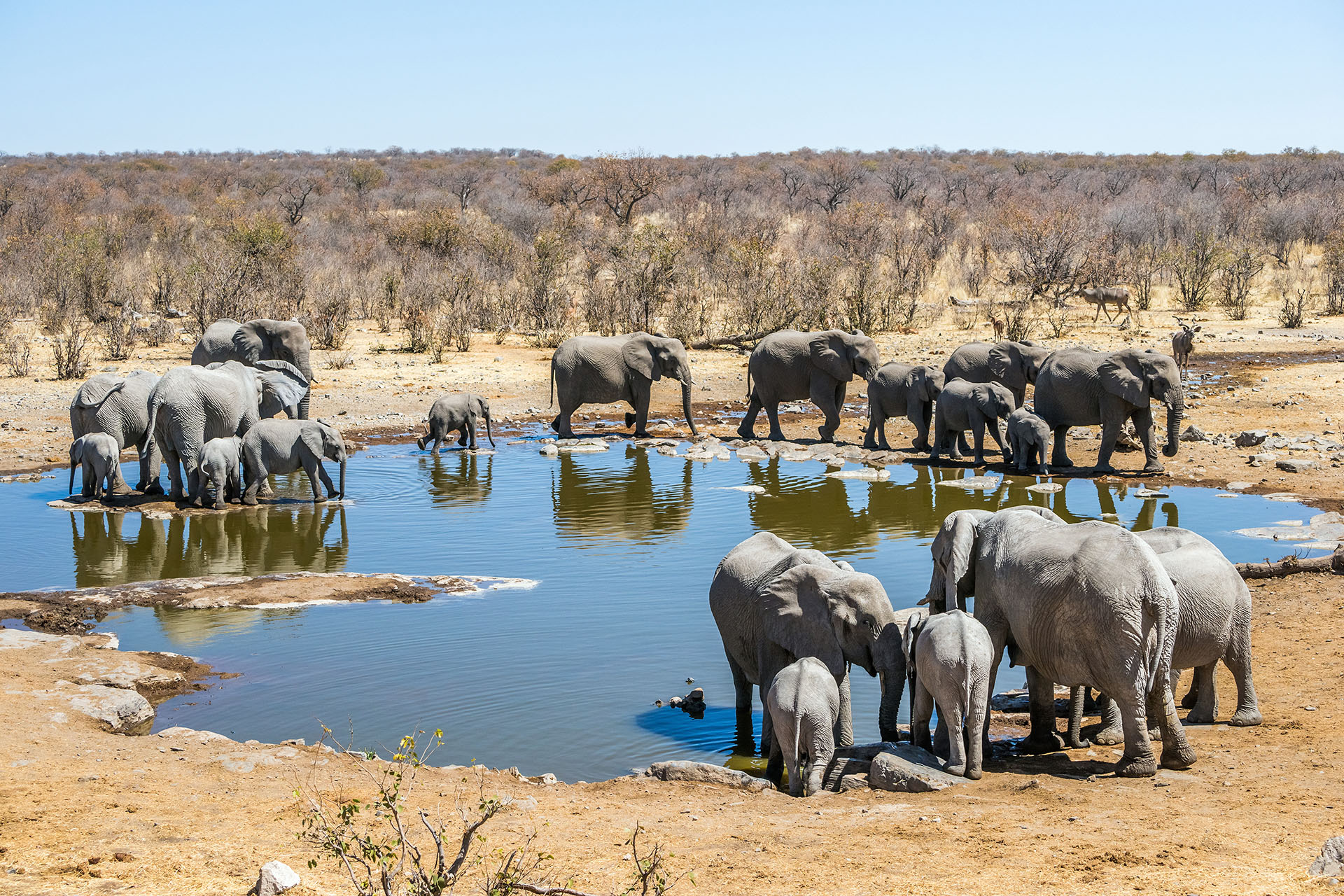Etosha National Park Namibia, Big Five Safari