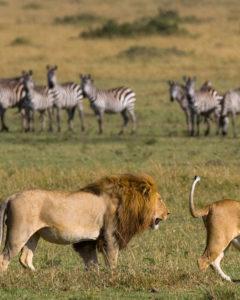Masai Mara Kenia, Kenia Rundreise