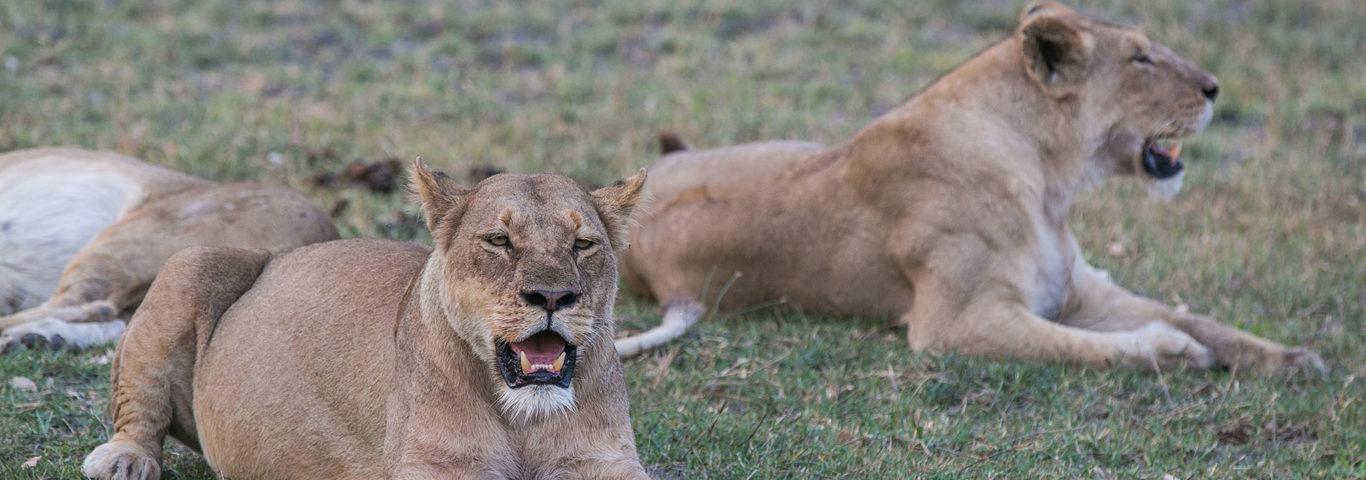 Moremi Wildlife, Afrika auf eigene Faust