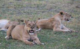 Moremi Wildlife Reserve Botswana