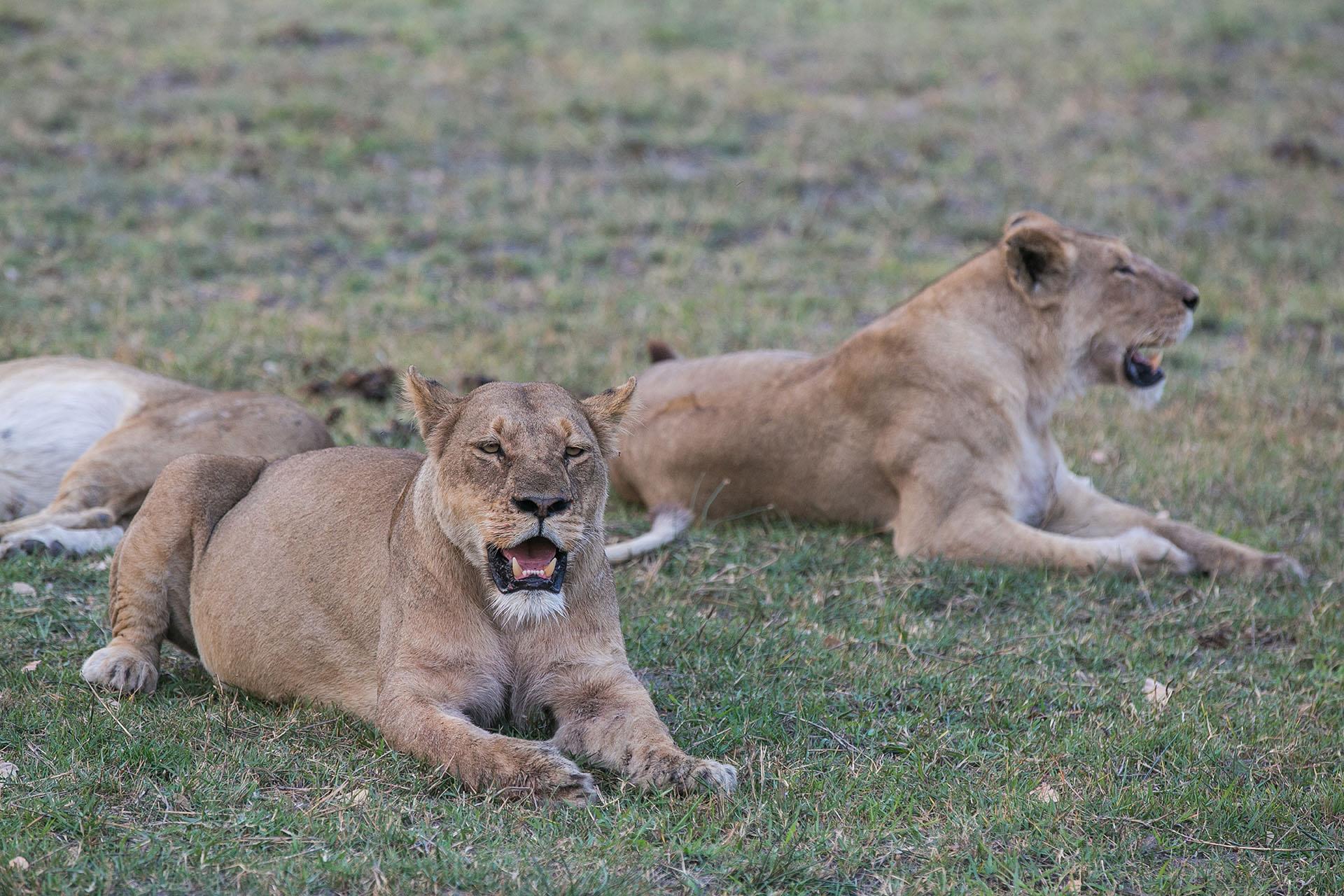 Safari Afrika welches Land, Moremi Wildlife Reserve Botswana, Rundreise BOTSWANA, individuelle Rundreise BOTSWANA, Mietwagenrundreise BOTSWANA, Reise BOTSWANA, erlebe BOTSWANA, Selbstfahrer BOTSWANA, Kleingruppenreise BOTSWANA, BOTSWANA auf eigene Faust, Gruppenreise BOTSWANA, Urlaub in BOTSWANA, Ferien in BOTSWANA, Familienreise BOTSWANA, Flitterwochen BOTSWANA, Hochzeitsreise BOTSWANA, Safari Botswana