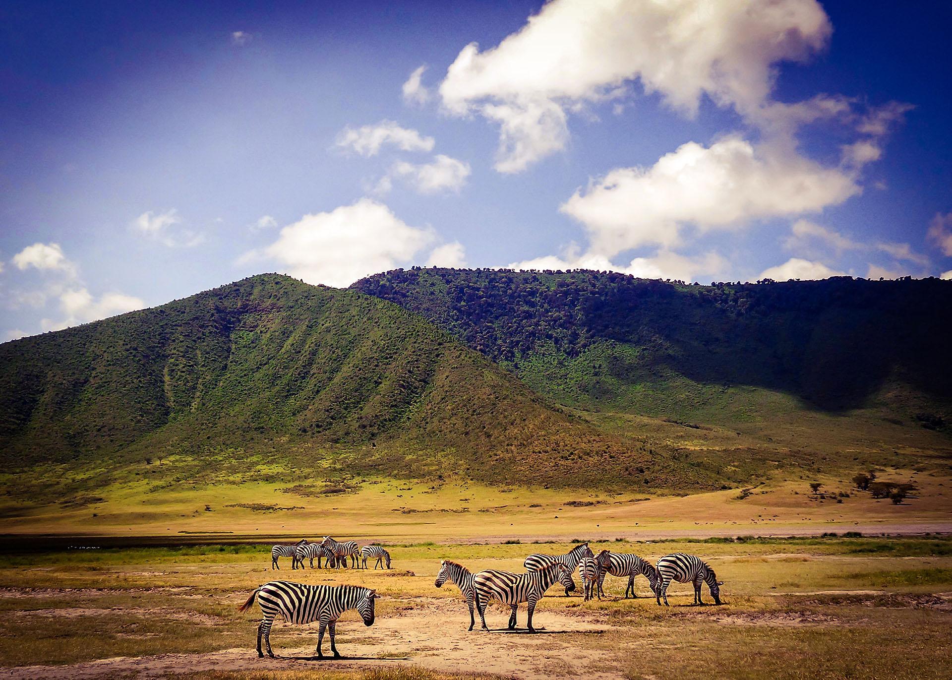 Ngorongoro Krater Safari, NGORONGORO NATIONALPARK, Abenteuerreise Afrika, Tansania Tour, Rundreise Tansania, individuelle Reise Tansania, Mietwagenrundreise Tansania, Reise Tansania, erlebe Tansania, Selbstfahrer Tansania, Kleingruppenreise Tansania, Tansania auf eigene Faust, Gruppenreise Tansania, Urlaub Tansania, Ferien in Tansania, Familienreise Tansania, Flitterwochen Tansania, Tansania Reiseziele, Reisetipps für Ihre Tansania-Rundreise, Safari Masai Mara, Safari in Tansania