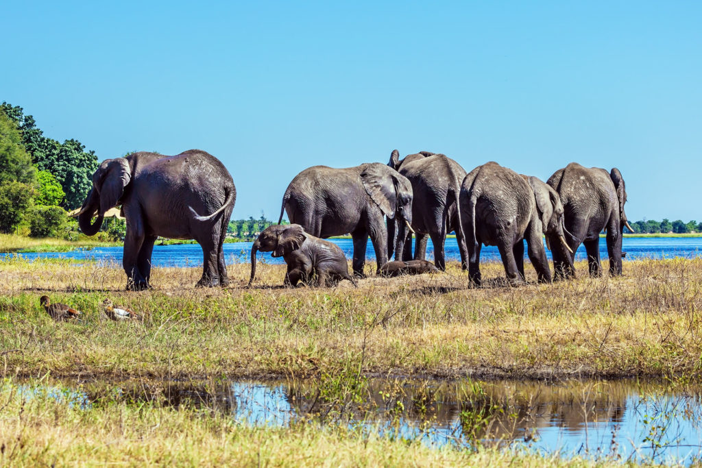 Okavango Delta Botswana, Safari im Oktober