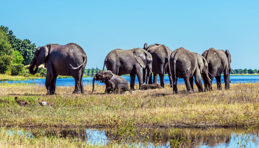 Okavango Delta, Botswana individuell