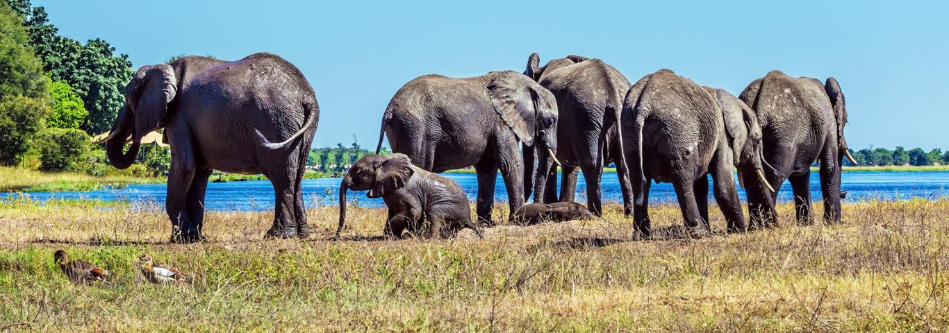 Okavango Delta, Safari südliches Afrika