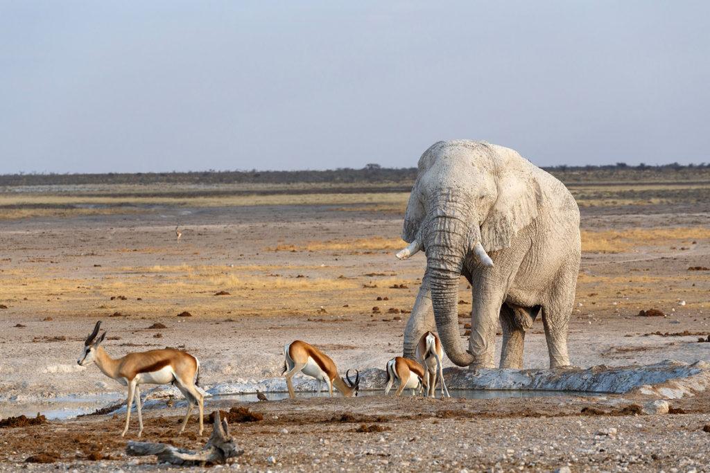 Savute Reserve Botswana