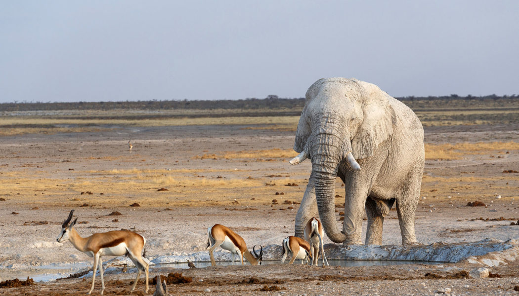 Savute Reserve, Botswana individuell