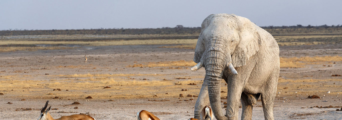 Savute , Safari südliches Afrika