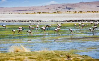 Atacama, Chile- und Argentinienreise