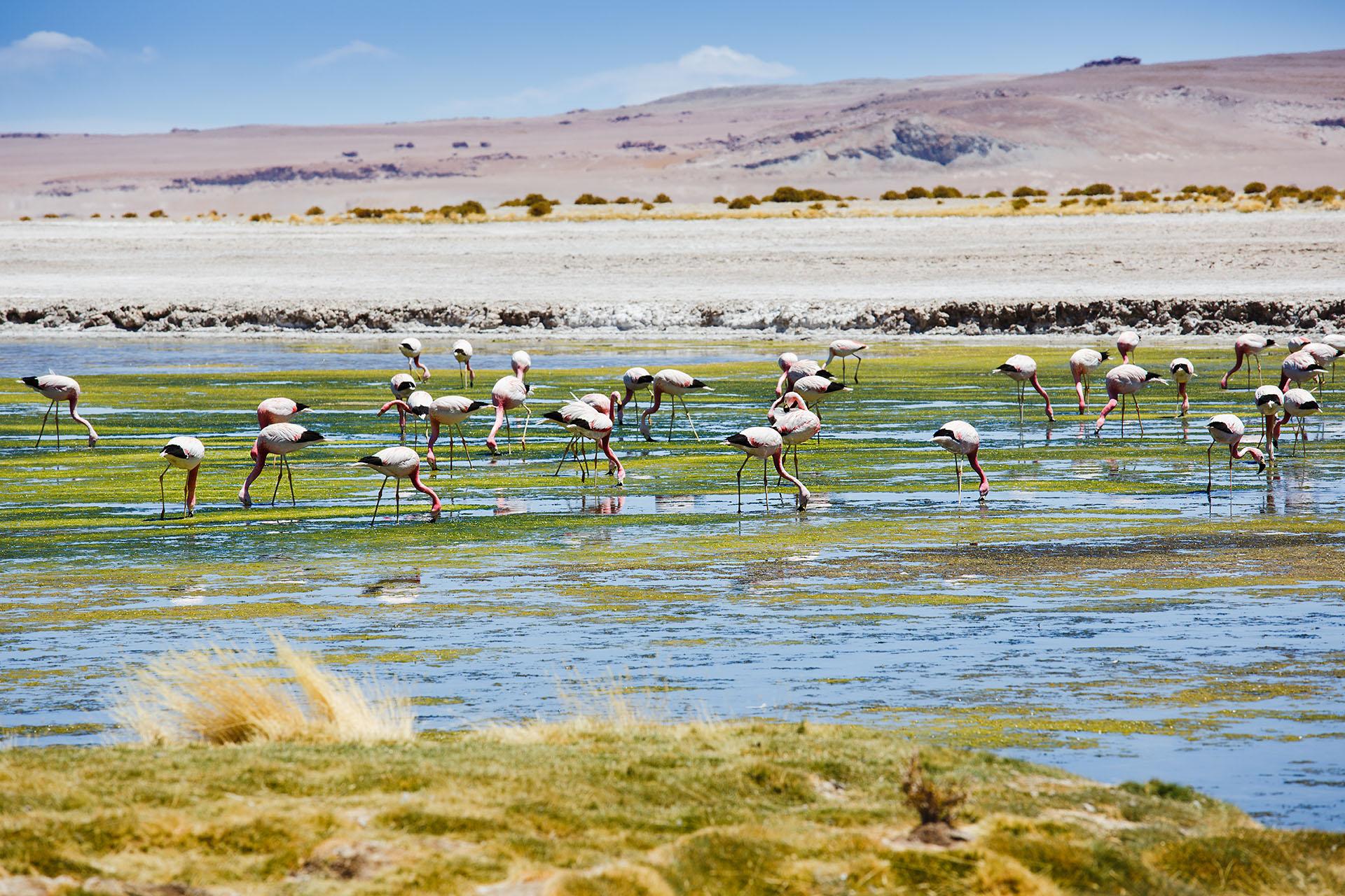 Atacama, Chile- und Argentinienreise, Mietwagenrundreise Argentinien & Chile, Rundreise ARGENTINIEN CHILE , individuelle Rundreise ARGENTINIEN CHILE , Mietwagenrundreise ARGENTINIEN CHILE , Reise ARGENTINIEN CHILE , erlebe ARGENTINIEN CHILE , Selbstfahrer ARGENTINIEN CHILE , Kleingruppenreise ARGENTINIEN CHILE , ARGENTINIEN CHILE auf eigene Faust, Gruppenreise ARGENTINIEN CHILE , Urlaub in ARGENTINIEN CHILE , Ferien in
