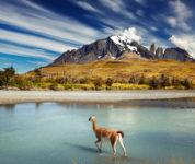 Patagonien (2)