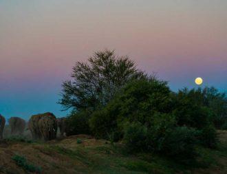Elefanten bei Vollmond im Tarangire Nationalpark während einer Tansania Safari Reisen