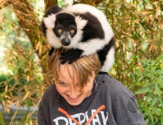Lemur sitzt auf dem Kopf von einem Jungen während einer Südafrika Safari Reise