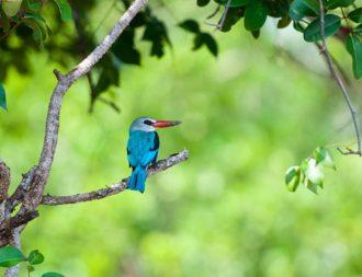 Vogelbeobachtungen bei einer Tansania Safari Reise im Saadani Nationalpark