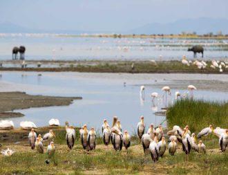 Störche und Pelikane im Manyara Nationalpark während einer Tansania Safari Reise