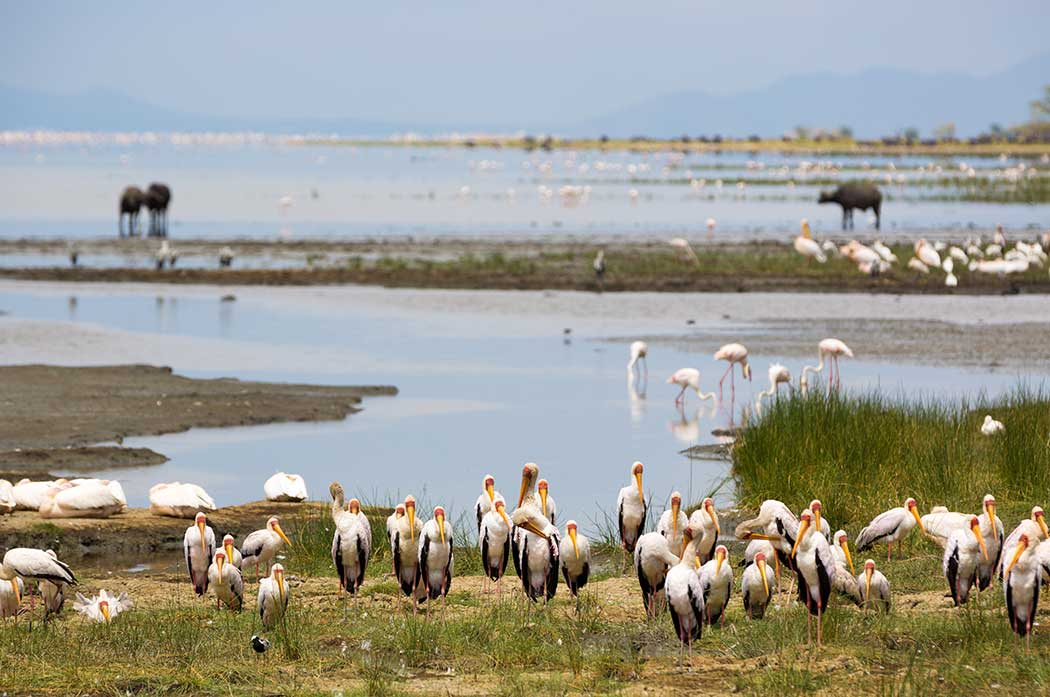 Manyara Nationalpark, Lake-Manyara-Nationalpark