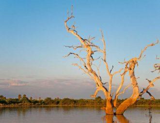 Baum im See im Selous Game Reserve während Tansania Safari Rundreisen