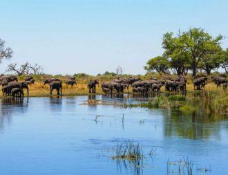 Elefanten im Caprivi während einer Namibia Safari Reise