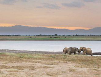 Elefanten kämpfen am See in Tsavo Ost auf einer Kenia Safari Rundreise