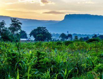 Feld im Mount Elgon Nationalpark