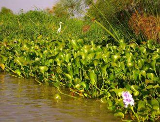 Grüne Landschaft am Lake Viktoria während einer Kenia Safari Rundreise
