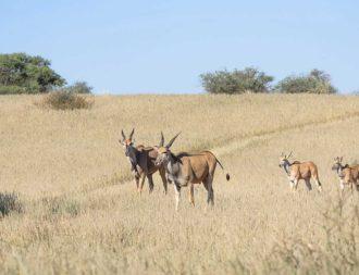 Kalahari bei einer Namibia Safari Rundreise