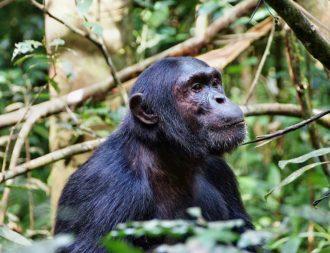 Uganda Safari Reisen im Kibale Forest Nationalpark