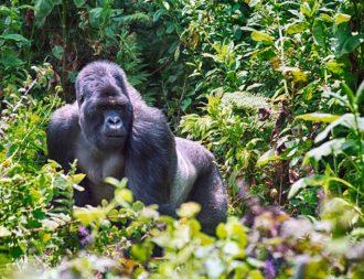 Mgahinga Gorilla Nationalpark