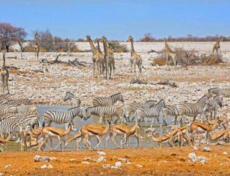 Okaukuejo Waterhole in Etosha während einer Namibia Safari Rundreise