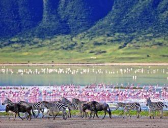 Bei Tansania Safari Reisen im Ngorongoro Krate Pelikane und Zebras entdeckt