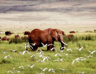 Ngorongoro Krater mit Elefanten und Vögeln