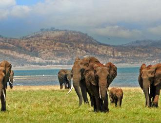 Elefanten auf Simbabwe Safari am Lake Kariba