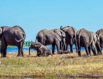 Elefantenherde im Okavango Delta während einer Botswana Safari Reise