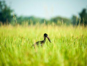 Vogel im Ziwa Rhino Sanctuary