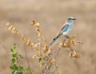 Vogel auf einer Kenia Safari Reise im Tsavo Ost Nationalpark entdeckt