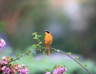 Vogel und Blumen im Queen Elizabeth Nationalpark während einer Uganda Safari