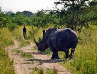 Uganda Safari Rundreisen im Ziwa Rhino Sanctuary