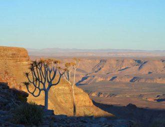 Bäume am fish river canyon während Namibia Safari Rundreisen